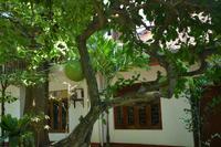 309 Landschaft Tissamaharama