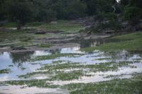 377 Safari im Yala Nationalpark