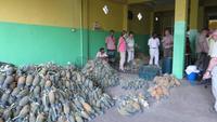 0164 Ananasverkostung