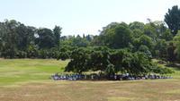 Botanischer Garten Kandy