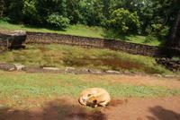 Ach ja, Hund müsste man sein in Sri Lanka!