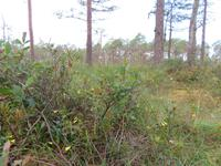 Rundreise Baltikum - Laheema-Nationalpark