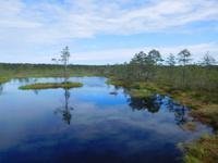 Estland_Laheema_Nationalpark_Moor (4)