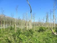 Kormoranwald auf der Kurischen Nehrung