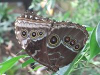 Jardin des Papillons