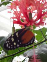 Schmetterlingsgarten, Grevenmacher