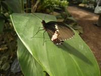 Schmetterlingsgarten in Grevenmacher