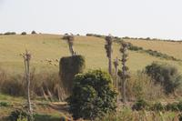 Störche bei Ausgrabungsstätte Chellah
