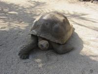 Schidkröten