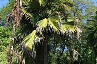 Seychellen - Botanischer Garten