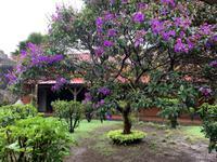 Blütenpracht auf Mauritius