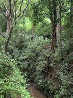 Spaziergang im Regenwald von Madagaskar