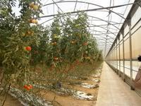 Bauernhof - Tomatenhalle