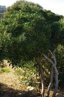 Ausflug Gozo