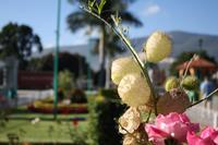 088 Blumenpracht in Santa Maria del Tule