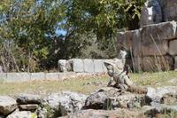 Bewohner von Uxmal
