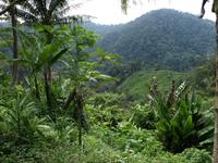 Cameron Highlands - Besuch bei den Orang Asli