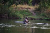 Bootsfahrt auf dem Okawango - Badetag