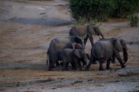 Bootsfahrt auf dem Chobe - noch mehr Elefanten