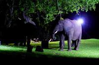A Zambezi River Lodge - Dinner mit Elefanten