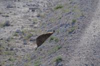 Etosha Nationalpark - Hyänenversteck