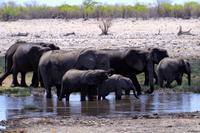 Etosha Nationalpark - noch mehr Elefanten