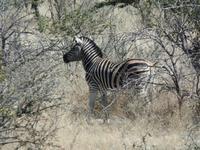 Tage Rundreise Namibia – Die Erlebnistour mit  Kalahari – Fish River-Canyon – Lüderitz – Namib – Swakopmund – Erongo Gebirge – Etosha Nationalpark – Windhoek (1009)