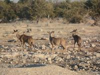 Tage Rundreise Namibia – Die Erlebnistour mit  Kalahari – Fish River-Canyon – Lüderitz – Namib – Swakopmund – Erongo Gebirge – Etosha Nationalpark – Windhoek (1082)