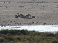 Tage Rundreise Namibia – Die Erlebnistour mit  Kalahari – Fish River-Canyon – Lüderitz – Namib – Swakopmund – Erongo Gebirge – Etosha Nationalpark – Windhoek (1126)