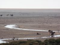 Tage Rundreise Namibia – Die Erlebnistour mit  Kalahari – Fish River-Canyon – Lüderitz – Namib – Swakopmund – Erongo Gebirge – Etosha Nationalpark – Windhoek (1174)
