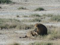Tage Rundreise Namibia – Die Erlebnistour mit  Kalahari – Fish River-Canyon – Lüderitz – Namib – Swakopmund – Erongo Gebirge – Etosha Nationalpark – Windhoek (1190)
