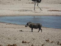 Tage Rundreise Namibia – Die Erlebnistour mit  Kalahari – Fish River-Canyon – Lüderitz – Namib – Swakopmund – Erongo Gebirge – Etosha Nationalpark – Windhoek (1289)