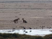 Tage Rundreise Namibia – Die Erlebnistour mit  Kalahari – Fish River-Canyon – Lüderitz – Namib – Swakopmund – Erongo Gebirge – Etosha Nationalpark – Windhoek (1340)