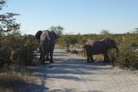 Tage Rundreise Namibia – Die Erlebnistour mit  Kalahari – Fish River-Canyon – Lüderitz – Namib – Swakopmund – Erongo Gebirge – Etosha Nationalpark – Windhoek (1396)