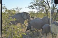 Tage Rundreise Namibia – Die Erlebnistour mit  Kalahari – Fish River-Canyon – Lüderitz – Namib – Swakopmund – Erongo Gebirge – Etosha Nationalpark – Windhoek (1401)
