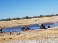 Tage Rundreise Namibia – Die Erlebnistour mit  Kalahari – Fish River-Canyon – Lüderitz – Namib – Swakopmund – Erongo Gebirge – Etosha Nationalpark – Windhoek (1728)