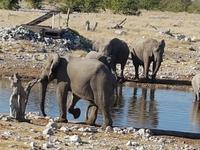 Tage Rundreise Namibia – Die Erlebnistour mit  Kalahari – Fish River-Canyon – Lüderitz – Namib – Swakopmund – Erongo Gebirge – Etosha Nationalpark – Windhoek (1749)