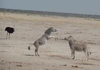 Tage Rundreise Namibia – Die Erlebnistour mit  Kalahari – Fish River-Canyon – Lüderitz – Namib – Swakopmund – Erongo Gebirge – Etosha Nationalpark – Windhoek (1850)