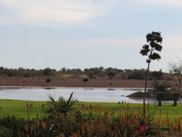 Lapa Lange Wasserloch