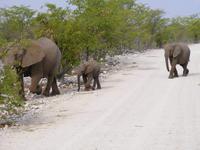 Safari im Etosha