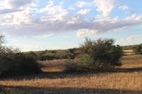 Gnus während der Sundowner-Fahrt auf dem Gelände der Anib Lodge