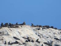 0323 Lüderitzbucht - Am Diaz Point - Robbenkolonie