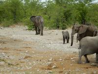 1019 Etosha-Nationalpark - Elefanten am Wasserloch