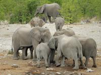 1033 Etosha-Nationalpark - Elefanten am Wasserloch