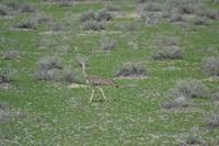 Tiere im Etosha Nationalpark (66)