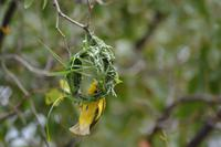 Tiere im Etosha Nationalpark (127)