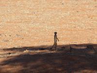 im Intu Afrika Kalahari Reservat - Erdmännchen