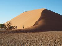 im Namib-Naukluft Nationalpark - Düne 45