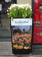 Tulpen in Amsterdam zur Werbung für den Keukenhof