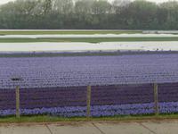 Blumenfeld am Straßenrand